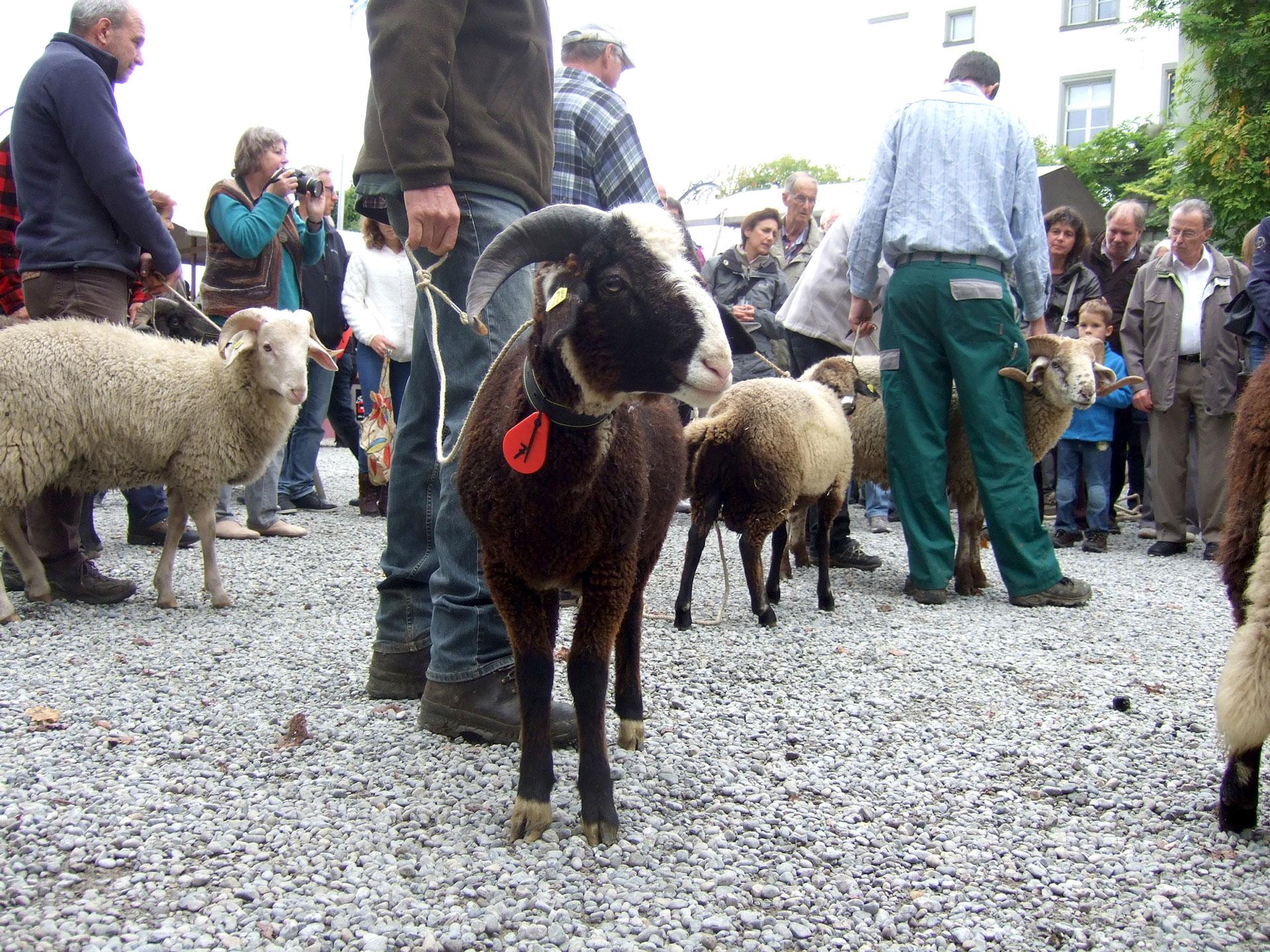 Wartegg_Herbstmarktfest19_Widder-Voting.jpg